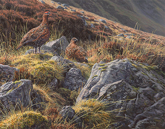 Red Grouse oil painting for sale